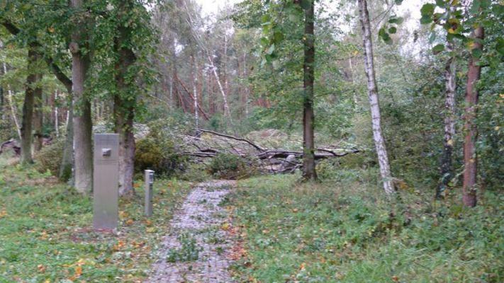 Umgekippte Bäume auf dem Gedenkplatz Ehemaliges Lagergelände